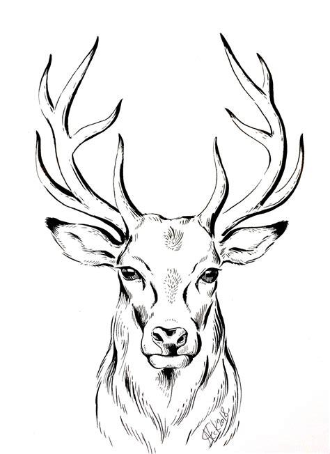 deer drawing at SHOP COM