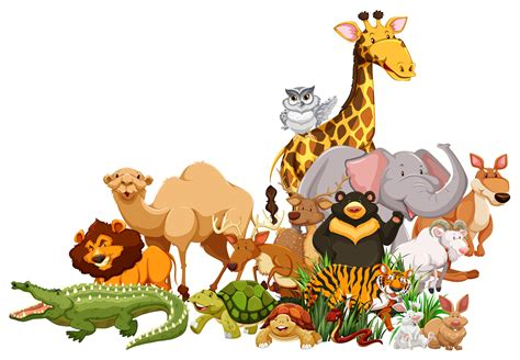 different kinds of wild animals with animation and pictures
