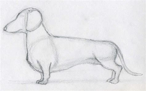 dog drawings How To Draw A Dog