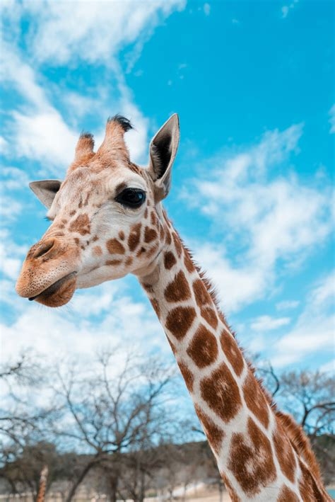 giraffe Pictures Images Photos Photobucket