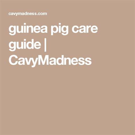 guinea pig care guide CavyMadness