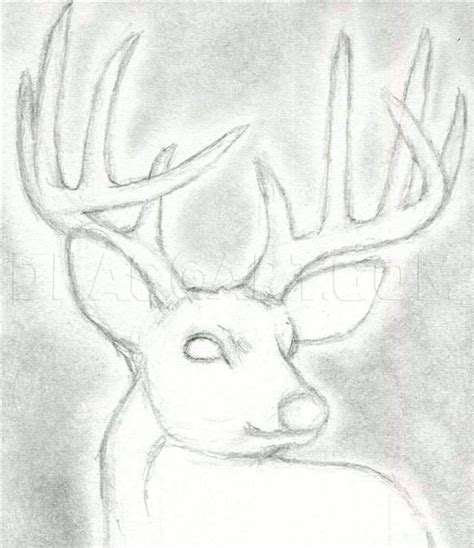how to draw a deer head buck dear head step 11 Pencil