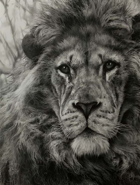 julie rhodes Julie Rhodes wildlife pencil artist