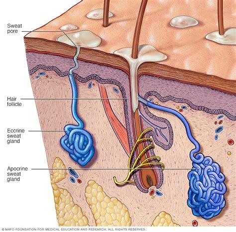 free download ebooks Sweat Pore Diagram