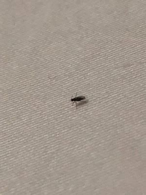 very small flying beetles in house Page 1