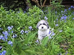 A Mindful Diet Four Weeks To Eating Awareness Mindful Living Book 2