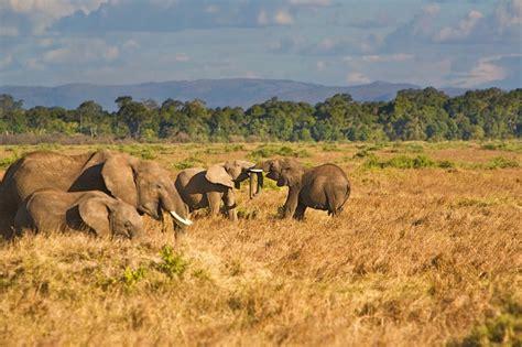 African Wildlife Safaris Kenya Uganda Tanzania Ethiopia Somalia ...