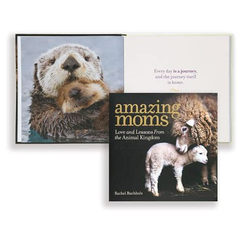 Amazing Moms Love And Lessons From The Animal Kingdom