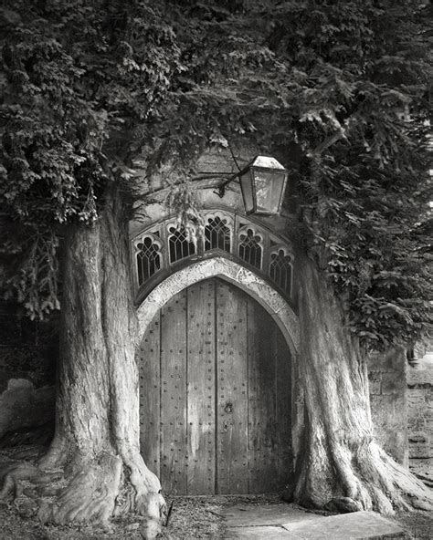 Ancient Trees Portraits Of Time