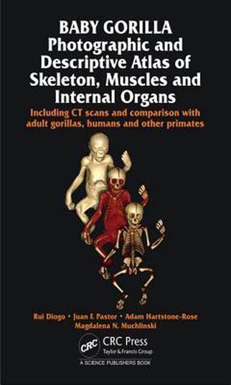 Baby Gorilla Diogo Rui Pastor Juan F Hartstone Rose Adam Muchlinski
