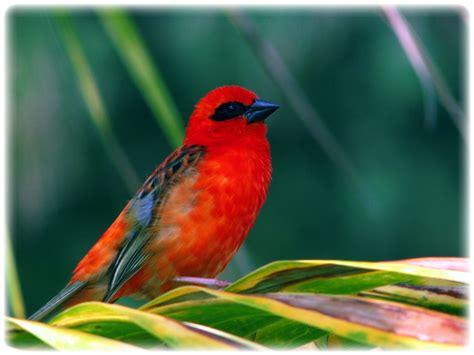 Birds Of Mauritius (ePUB/PDF)
