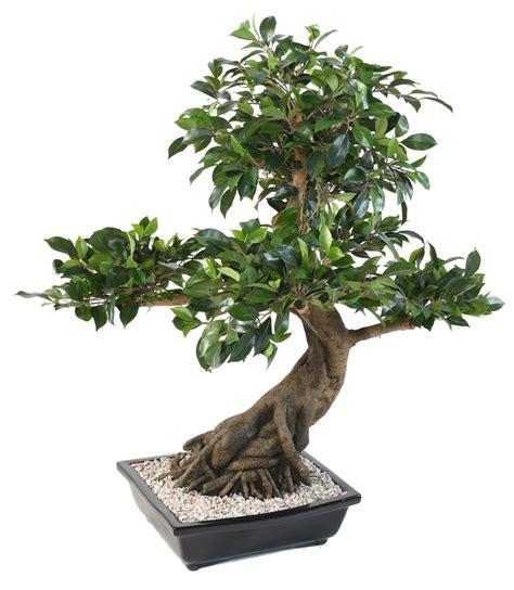 Bonsai Arbres Miniatures French (ePUB/PDF)