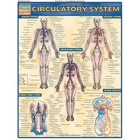 Circulatory System Quick Study Academic