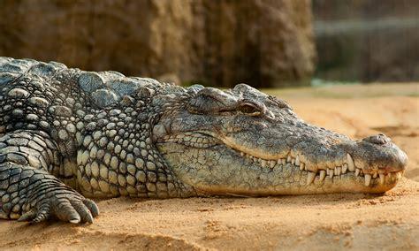 Crocodiles (ePUB/PDF) Free