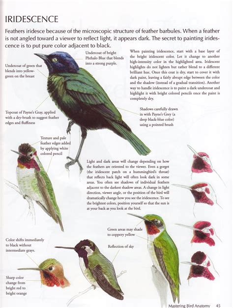 Laws Guide To Drawing Birds The