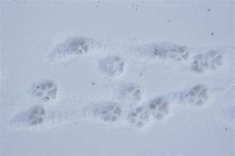 Paw Prints In The Snow Grindley Sally (ePUB/PDF)