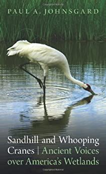 Sandhill And Whooping Cranes Ancient Voices Over Americas Wetlands