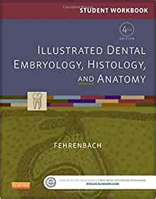 Student Workbook For Illustrated Dental Embryology Histology And Anatomy 4e