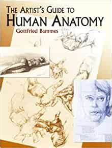 The Artists Guide To Human Anatomy Dover Anatomy For Artists