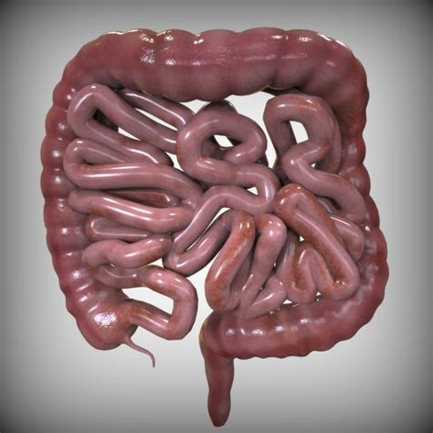 Real Human Intestines | Interior Designers For Hotels